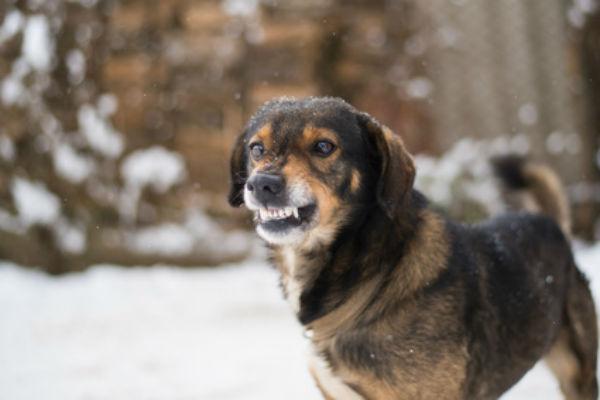 greathouse-trial-law-atlanta-accident-dog-bite